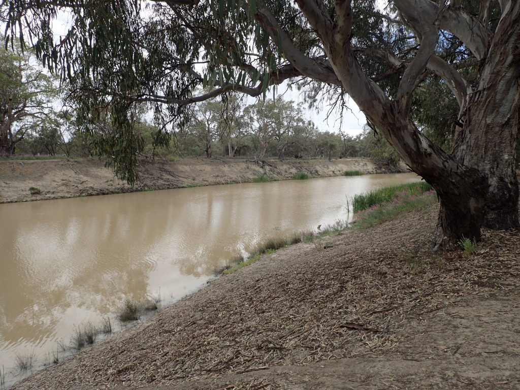 The banks of the Darling River in Kinchela National Park
