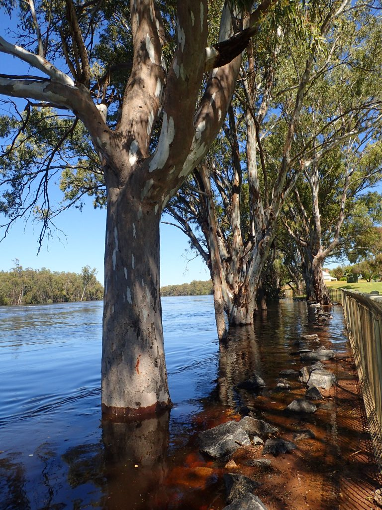 Murray River waters... VIC/NSW border