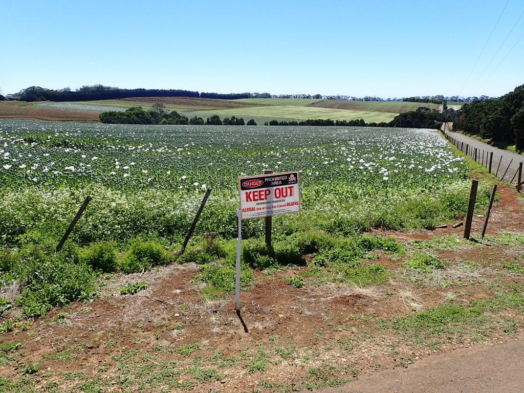 Poppy farms in Tasmania